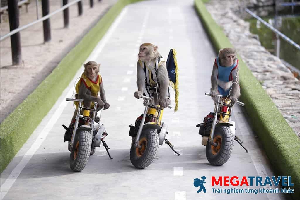 Tour Đảo Khỉ Nha Trang | Đùa vui cũng những chú khỉ tinh nghịch